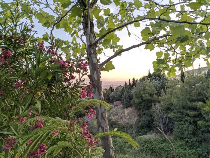 Flowering plants and trees against sky