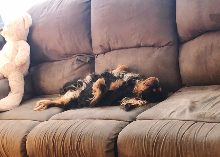 Content Happiness Family Puppy EyeEm Selects Furniture Relaxation Mammal Domestic Room Animal Themes Domestic Animals Pets Canine Sofa Sleeping Cozy Indoors  Comfortable
