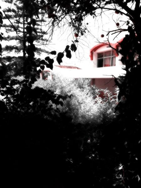 I loved it in here ♥ 🥀 Hideout The Spot Scenics Obscure Plant Tree Under The Tree Plantation Urban Nature Branch Red Window Nature Duochrome Zoning Out Chilling Relaxing Pause Time Pause Cafe Streetphotography Built Structure Architecture Building Exterior Building Shootermag
