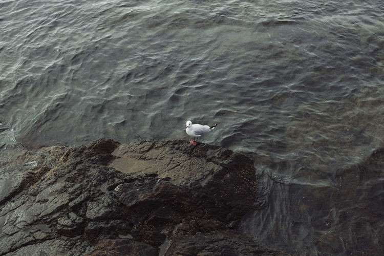 High angle view of seagull perching on rocky shore