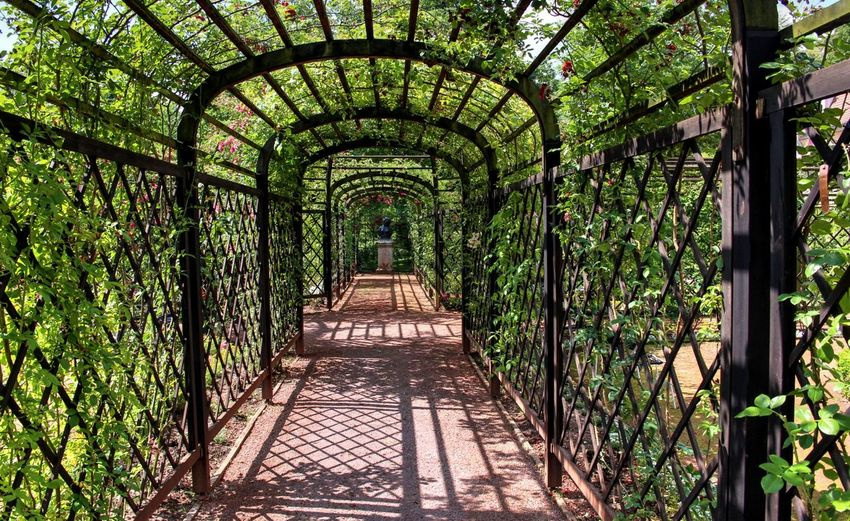 Botanical Garden Creeper Plant Day Forest Freshness Green Color Greenhouse Growth Ivy Leaf Nature No People Outdoors Plant Tree