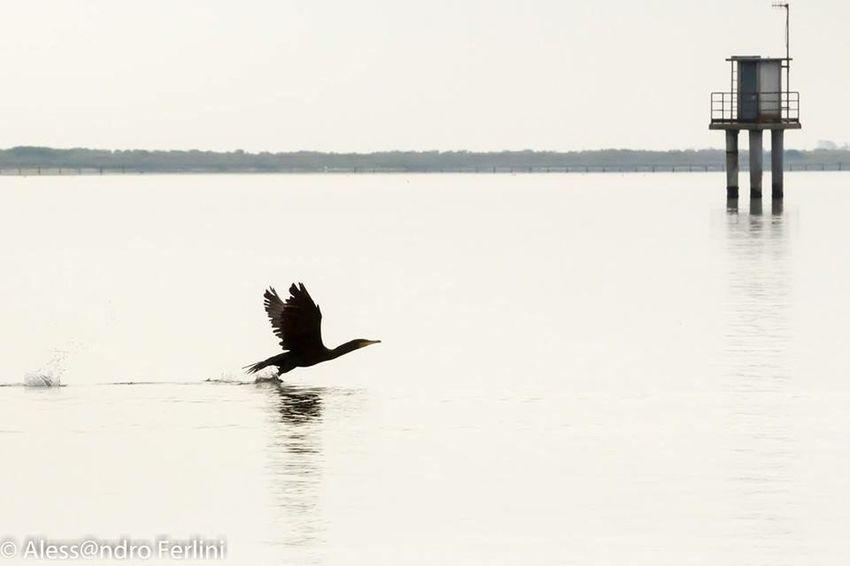 Enjoying Life Ornithology  Bird Bird Photography Flying River Water Silhouette