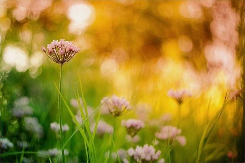 июль лето тепло Закат солнце краскилета прекрасно летнийзакат August Summer Sunset Beautiful Summertime Sunset Fayritale сказка Sonya Sonya7 Sonyalphasclub Cool втраве OlympusPEN Bokeh Bokehlicious Instagood flowersandmacro flower_daily flowers naturelovers nature tree