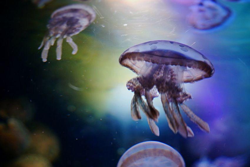 Jerryfish Aquarium EyeEm Best Shots Rainbow Colors