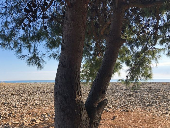 Mare a metà. Tree Nature Tranquil Scene Beauty In Nature Tranquility Beach Sky Sea