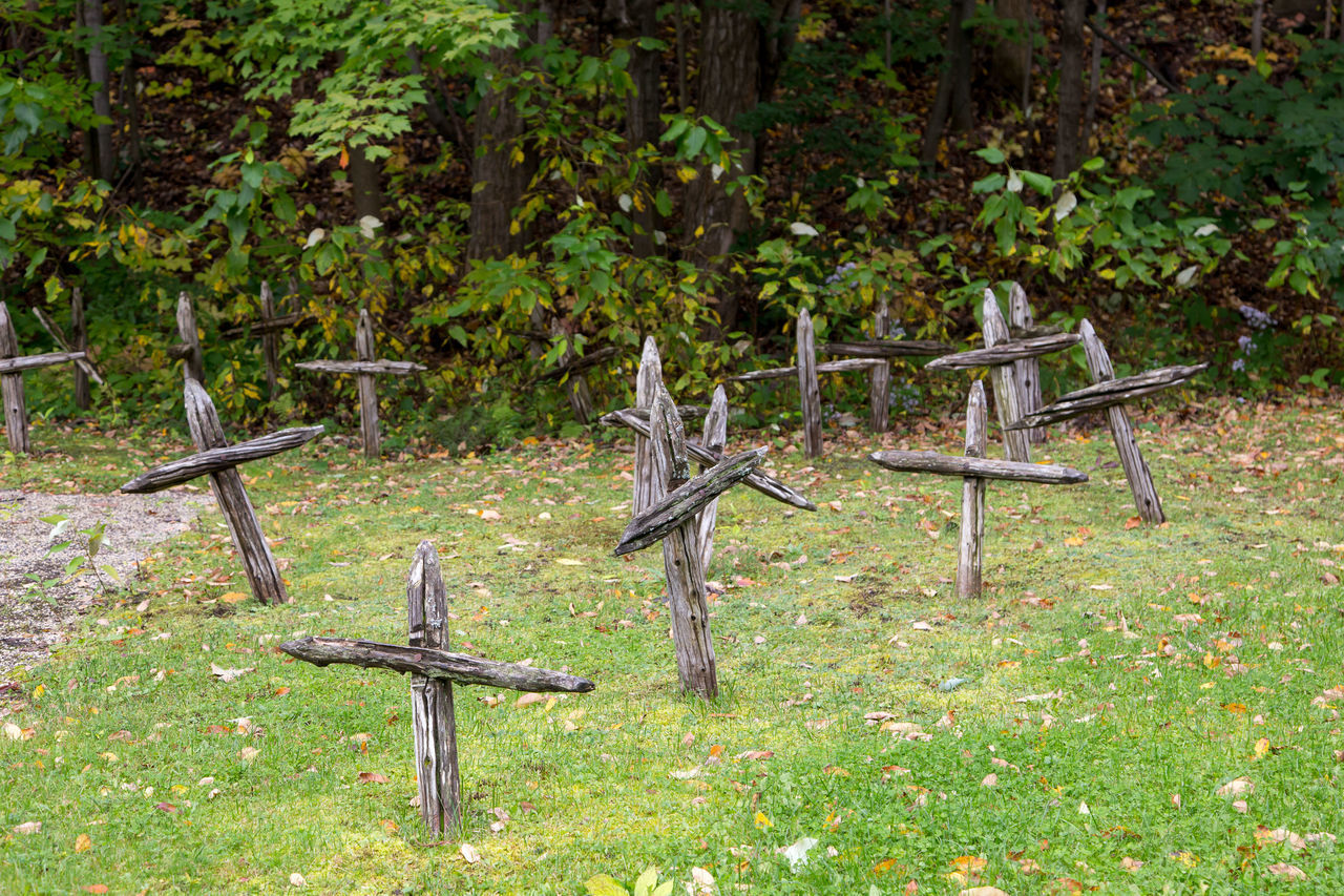 cross, religion, no people, plant, belief, nature, spirituality, cemetery, day, land, tree, grave, wood - material, outdoors, grass, field, symbol, cross shape, tranquility