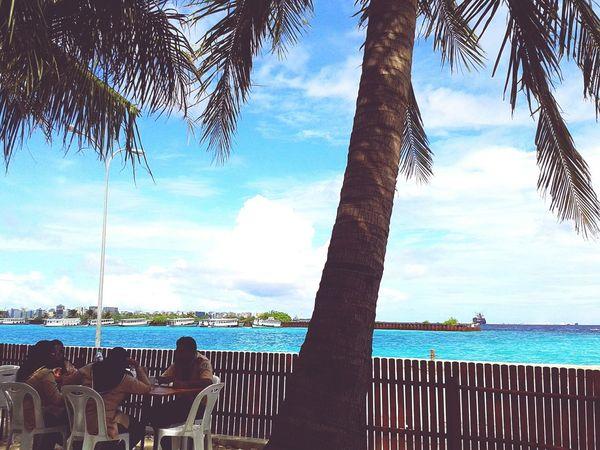 Relaxing Sky Skyporn Blue Sky Coconut Trees Samsung Galaxy S3 Mini