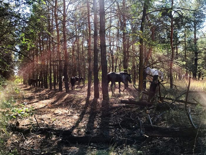 Horse in a forest
