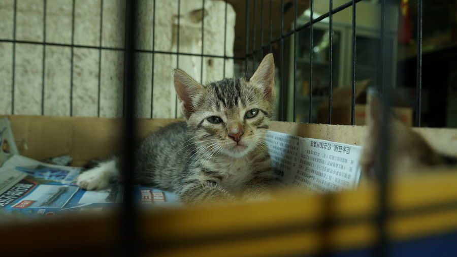 Cat Cat Lovers Cats Of EyeEm Gatto Cats Lovers  Kot Cats 🐱 Meow🐱 Neko Cat Photography Cats Chat 猫 Meow 貓 Gato Katze Cat♡ Pets Hkcats 猫の写真 喵星人 貓星人 貓咪