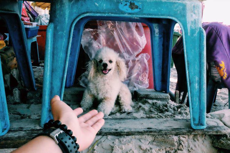 Hua Hin New Friend Pets Dog First Eyeem Photo