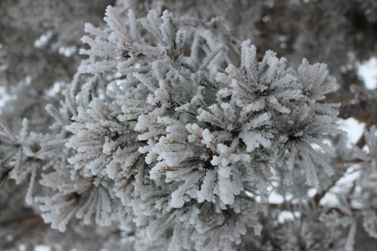 Frozen Ice Winter Beauty In Nature Close-up Cold Temperature Focus On Foreground Fragility Frozen Nature No People Plant Sky Station Snow White White Color