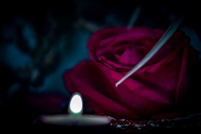 Close-up Red Focus On Foreground Indoors  No People Selective Focus Pink Color Flower Flowering Plant Still Life Rose - Flower Rosé Beauty In Nature Petal Nature Night Freshness Luxury