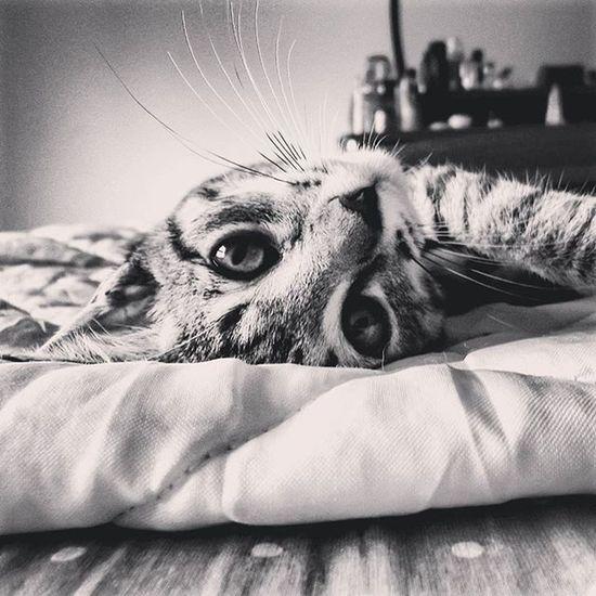 Cucu 😘 ° E o Kakashi, passa por aqui, para desejar uma boa noite a todos! 😻✌ ° Kakashi Goodnight Everyone Búúh Cat Kitty Blackandwhite Pb Photooftheday Nice Cute Baby Kiss Bed Eyes Fear Wild Burn Fire Ilhadasfotos