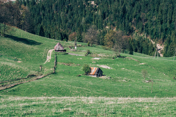 Two abandoned wooden barns seen from a hill above the valley they are standing in. Barns Countryside Grass Hill Huts Idyllic Outdoors Pieniny Poland Remote Rural Scene Rural Scenes Scenics View From Above Wooden