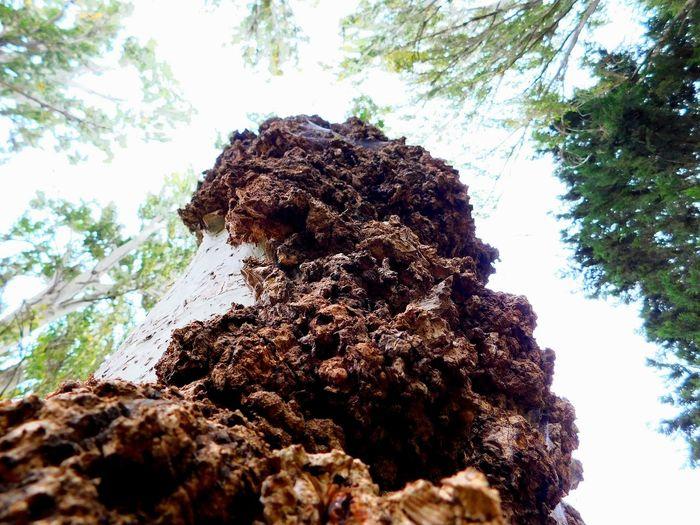 VitoriaGasteiz Txusty Closeview Tree Sky Close-up