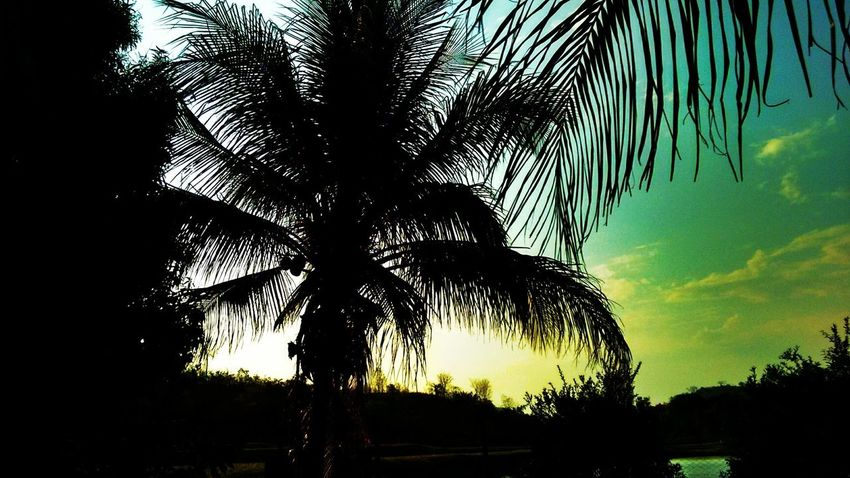 Beauty In Nature Day Growth Low Angle View Nature No People Outdoors Palm Tree Scenics Silhouette Sky Sunset Tranquil Scene Tranquility Tree Tree Trunk