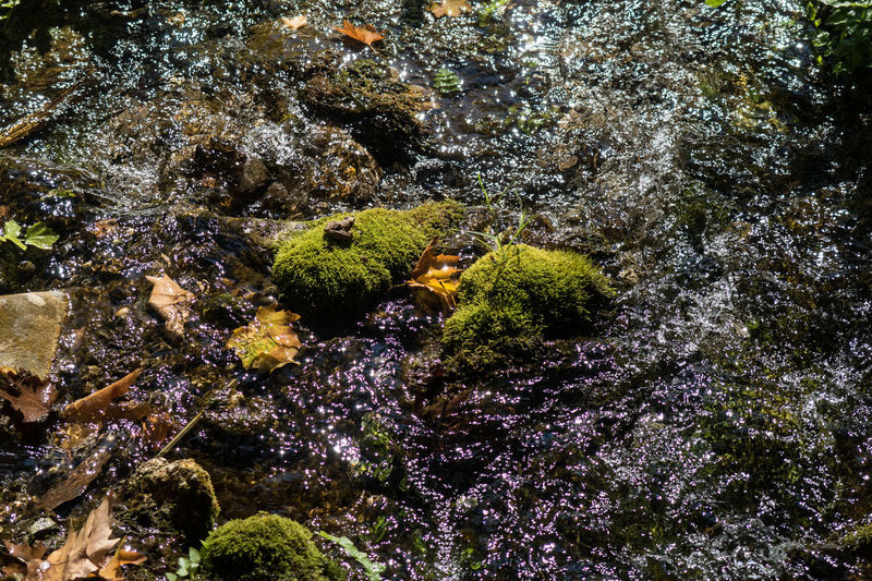 Mossy stones and leaves in a small creek ion Albania No People Beauty In Nature Growth Humid Wet Growing Slow Mumbling Tranquility Autumn Mossy Stone Reflection Flowing River Creek Fall Leaves Moss Outdoors Rock Water Nature Plant High Angle View