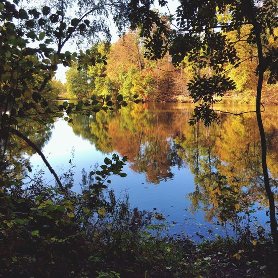 Tree Reflection Tranquility Lake