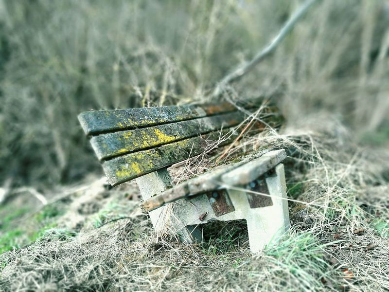 Nature Outdoors Day EyeEmNewHere Huaweiphotography Huawei P9 Leica HuaweiP9 Photography Themes Parkbank Old Mutter Natur Mothernature Mother Nature Beauty In Nature No People Close-up Vintage Minimalist Architecture The Secret Spaces EyeEm Diversity Art Is Everywhere 3XSPUnity