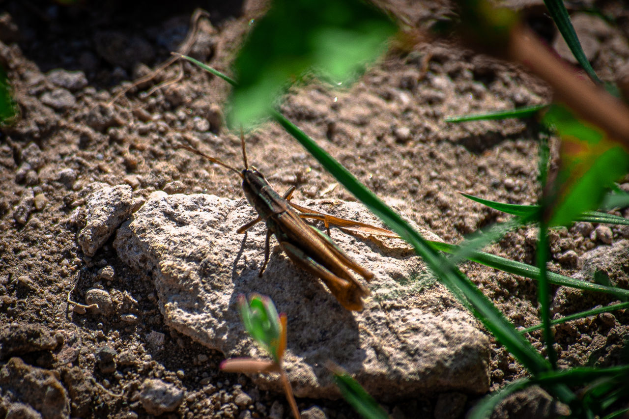 HIGH ANGLE VIEW OF A LIZARD ON FIELD