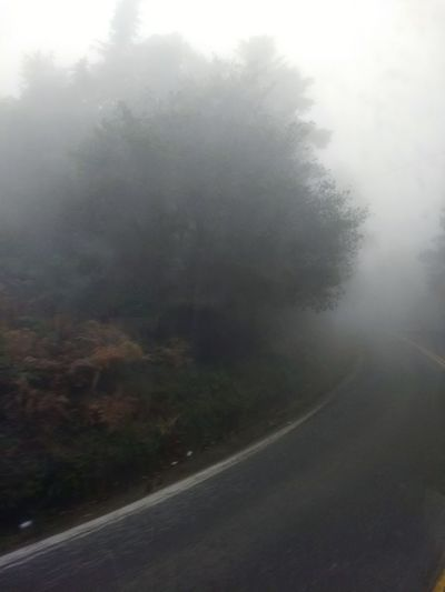 vacaciones Fog Tree Weather Road No People Outdoors Forest Nature Winter