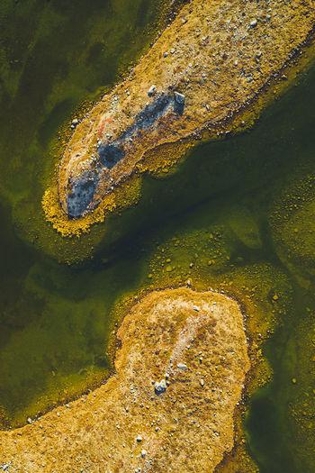 High angle view of crocodile on rock