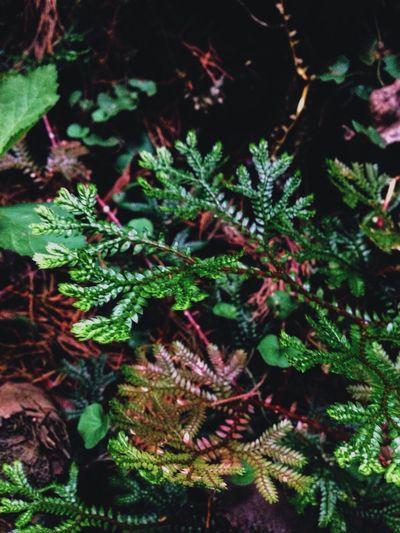 Flower Green Grass Gound Beauty Bosque De La Hoja Nature Pretty Road Trip Leave Forest Costa Rica
