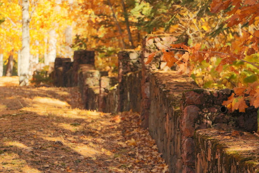 'Stonewalled by Autumn' Autumn Autumn Beauty Autumn Colors Autumn Leaves Cobblestone Cobblestone Wall Copper Harbor Fall Fall Beauty Fall Colors Fall Leaves Great Outdoors Michigan Mothernature Nature Northern Michigan Orange Orange Leaves Outdoors Season  Upper Peninsula Yellow Yellow Leaves