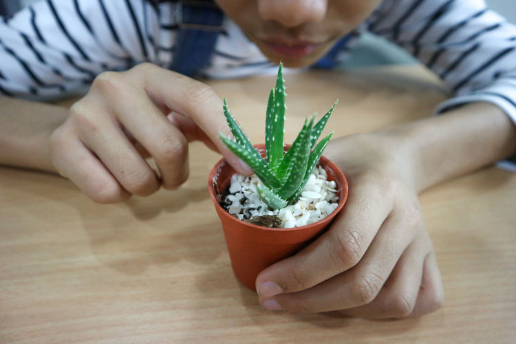 Close-up of girl touching succulent plant in pot on table