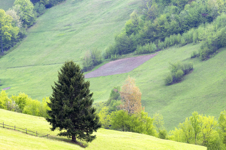 High angle view of pine trees on field