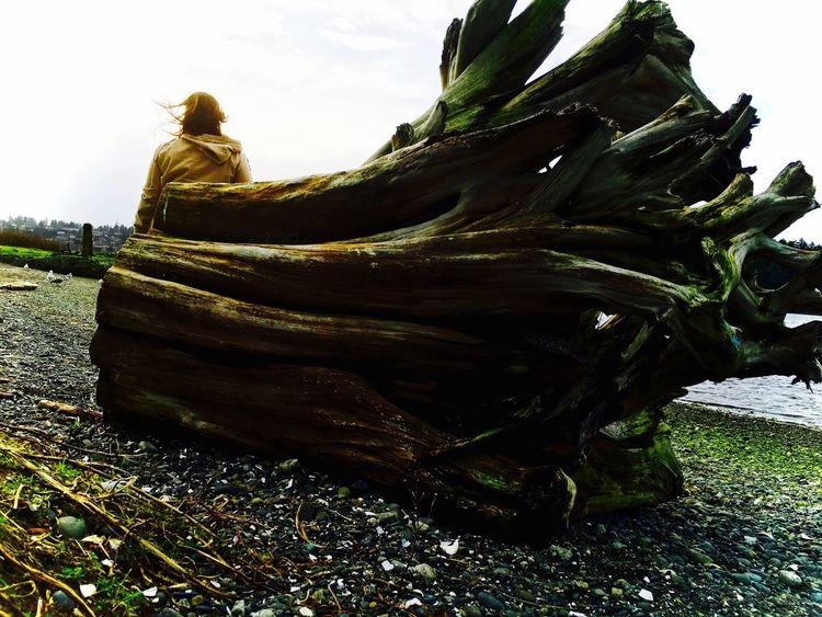 Windy day Windy Day Wind Beach Beachphotography Beach Life Beach Photography Driftwood