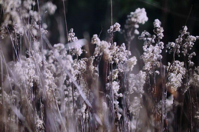 Defocused Nature Wildflower Wildlife Shadows & Lights Flower Close-up Plant Life Growing