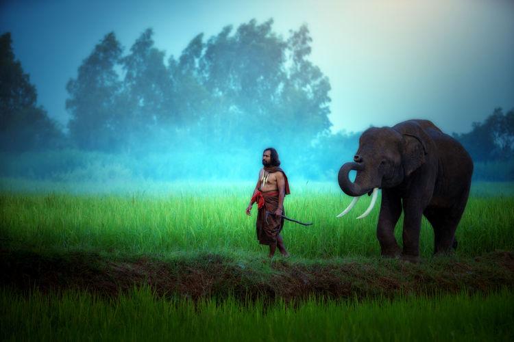 Full length of elephant on field