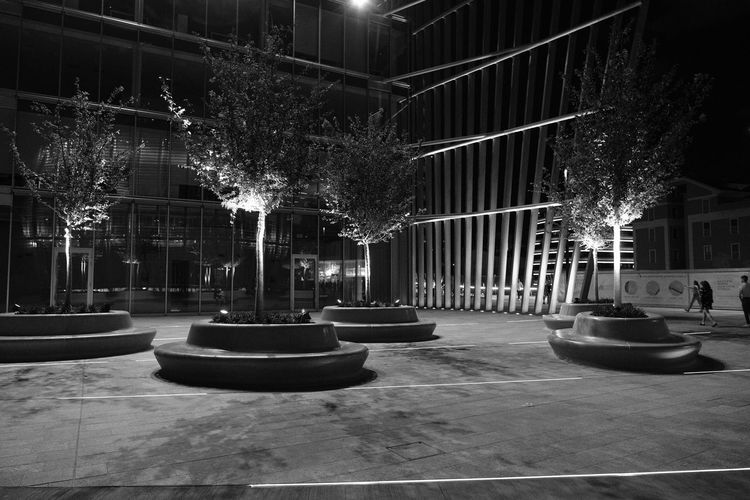Trees Architecture Black And White Friday Building Exterior Built Structure City Illuminated Night No People Outdoors