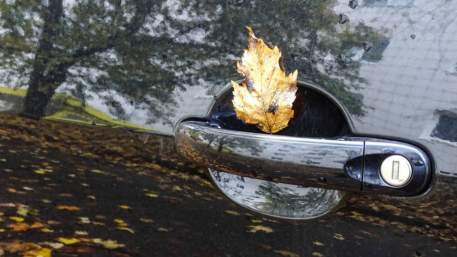 Autumn Car Close-up Leaf No People Outdoors Parking Violation Ticket Reflections Tree