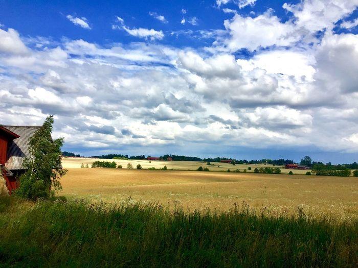 Field Nature