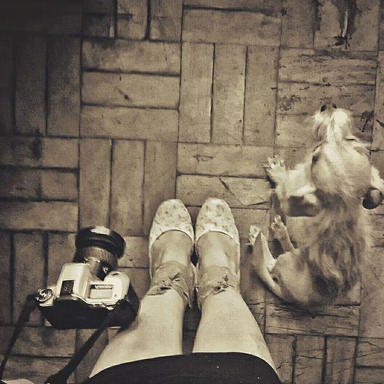 Pets Corner Minolta Reflex Filme Photography Animals Animal Photography Dogs Taking  Cute