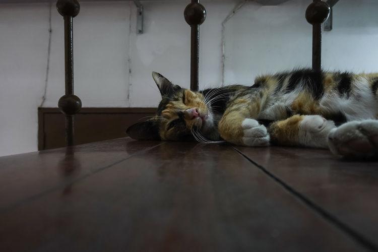 Portrait of cat sleeping on floor