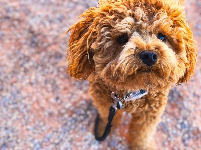 Cute dog Cute