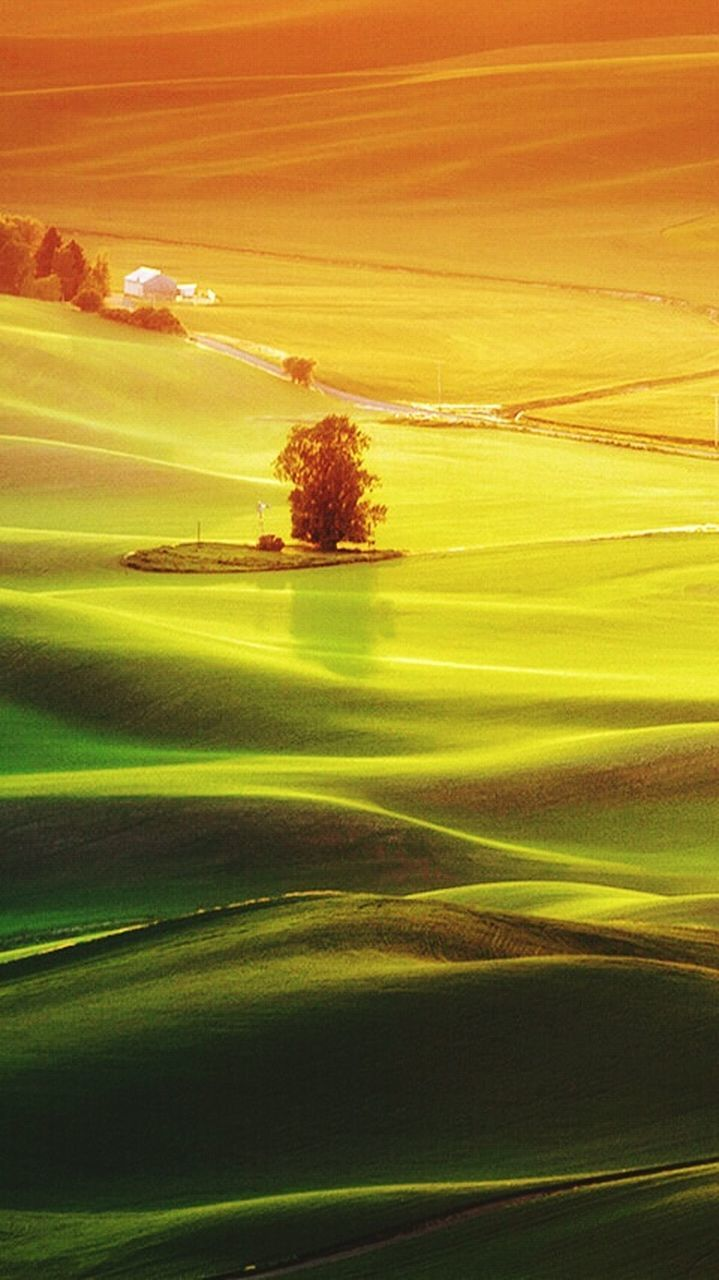 landscape, tranquil scene, nature, sunset, scenics, tranquility, beauty in nature, field, no people, outdoors, rural scene, tree, day, grass, sky