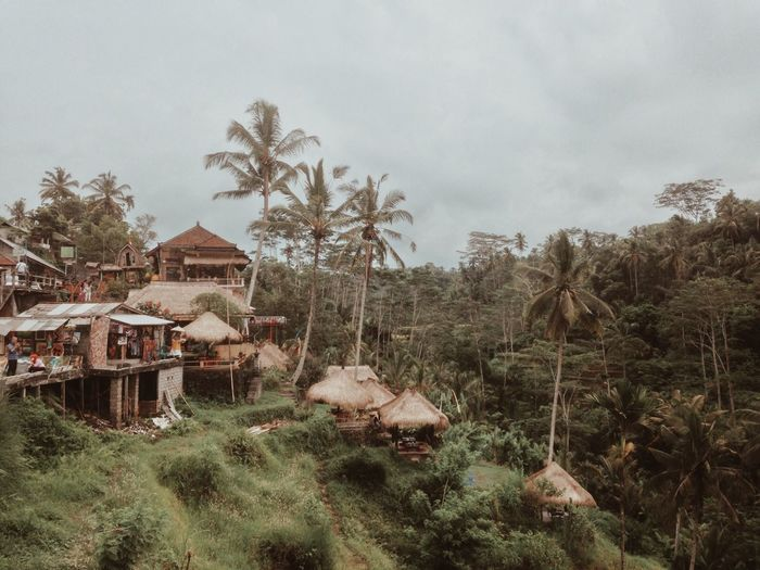 somewhere around Bali Tree Built Structure House Sky Building Exterior Architecture Grass No People Field Landscape Outdoors Day Nature Country House Animal Themes Mammal Village Village Life EyeEm Best Shots EyeEmbestshots Landscape_Collection