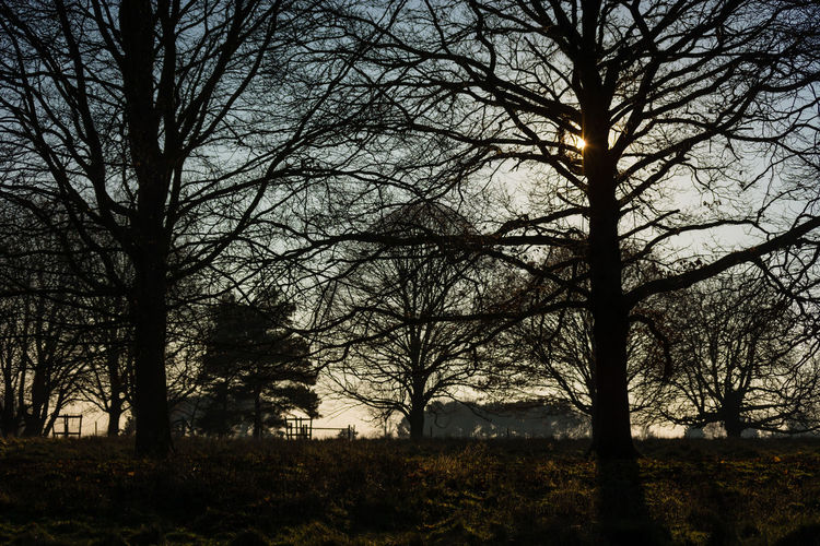 Silhouette trees in forest against sky