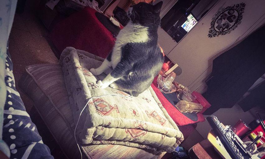 Cat LOL Oncharge