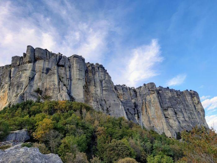 Tree Cliff Rock