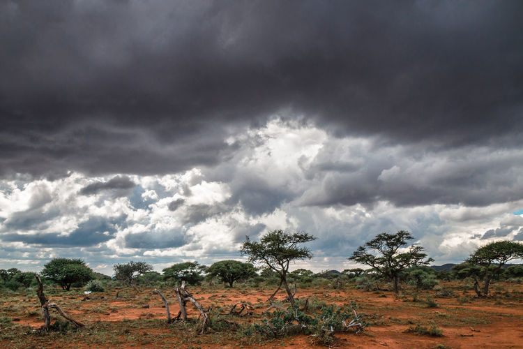 Trees on field against storm clouds