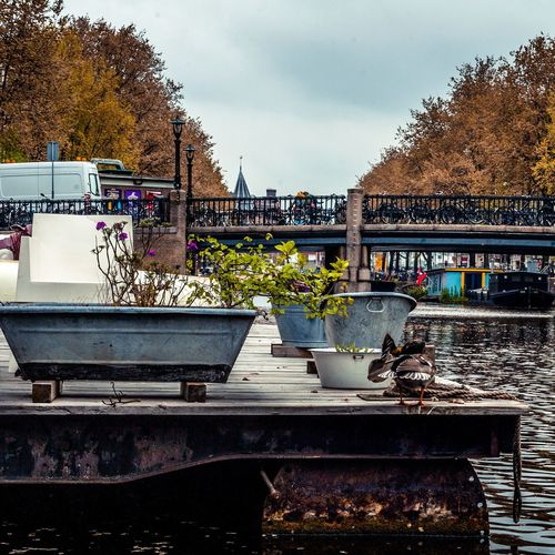 Outdoors Bridge - Man Made Structure Sky Amsterdam Water Travel Destinations Cloudy Sky Cloudy Day Boats Canals Animal In The City Animal Photography Bird Amsterdam City The Street Photographer - 2017 EyeEm Awards