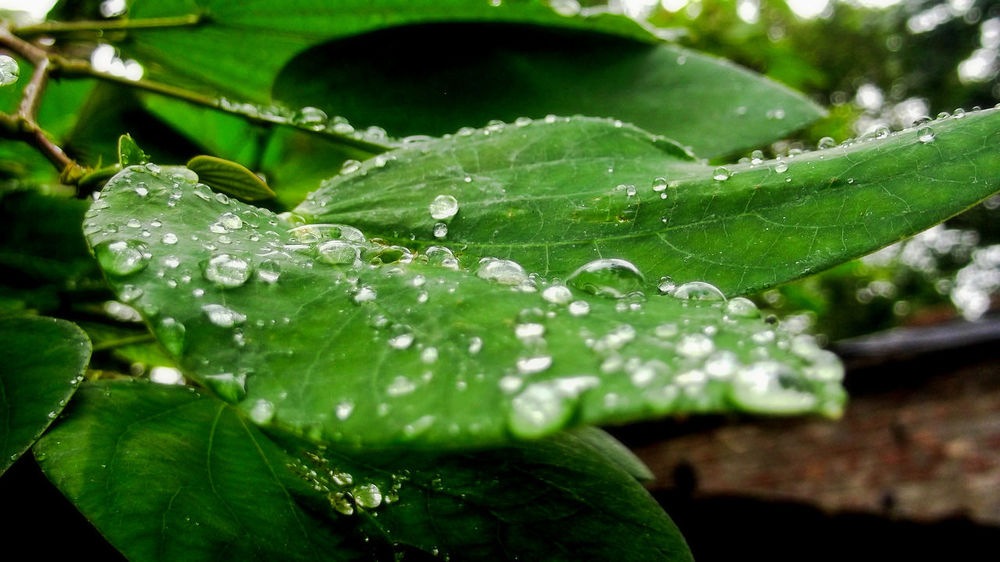 Nature Leaf Water Drop Wet Green Color Beauty In Nature