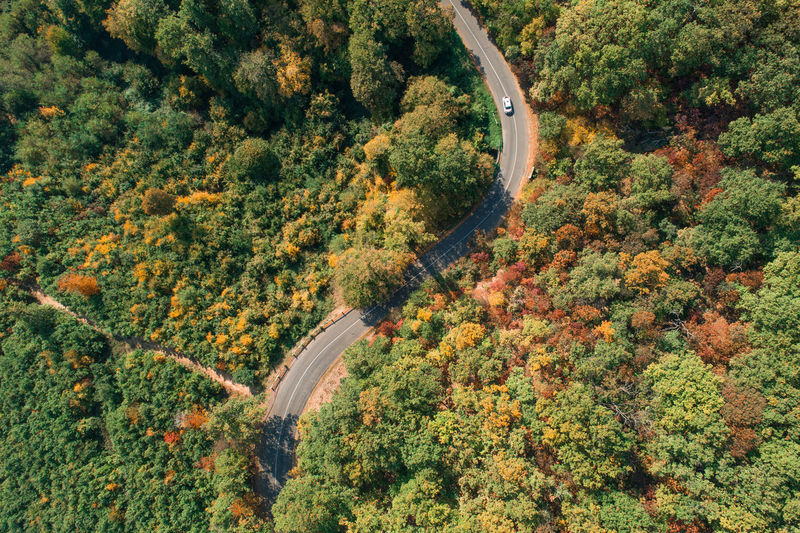 Tree Plant Road Transportation High Angle View Scenics - Nature Day Growth Nature Forest Beauty In Nature No People Environment Autumn Tranquil Scene Land Tranquility Curve Green Color Non-urban Scene Outdoors Change