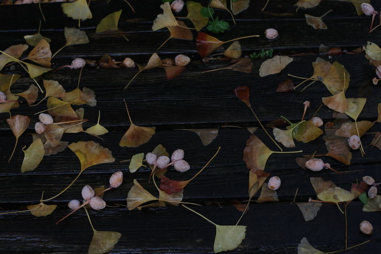 Autumn leaves on wooden wall