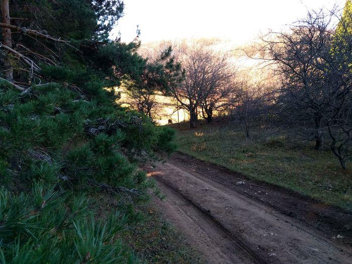 road Tree Road